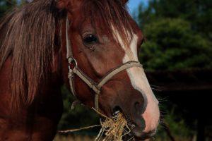 Hat mein Pferd einen verrenkte Wirbel?