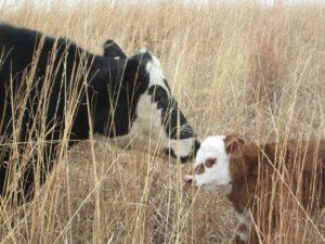 Helfer Bauernhof gesucht