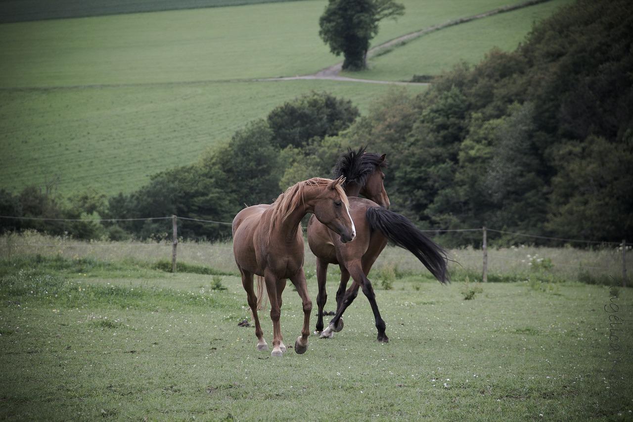 fragen beim pferdekauf