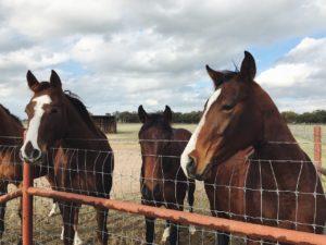 Helfer Pferdehof finden
