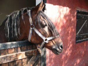 Helfer Pferdestall – Weg zum selbständigen Pferdezüchter
