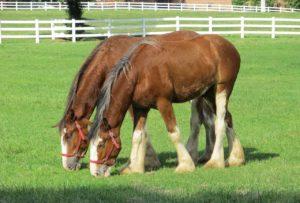 Helfer Pferdestall gesucht