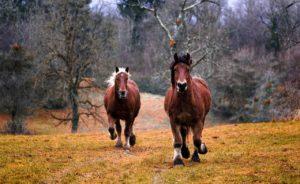 Pferdepfleger Vermittlung – Pferd ruhig zum stehen bringen