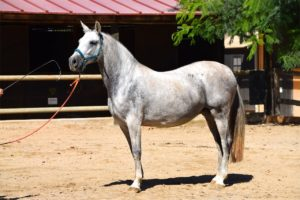 Pferdepfleger Vermittlung