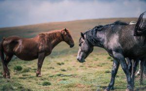 Pferdepfleger für Stallarbeit