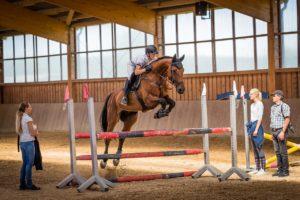 Pferde Helfer – wie man Verrenkte Wirbel und Blockaden beim Pferd behandelt