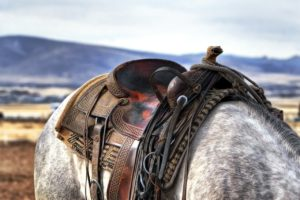 Pferdepflegerin gesucht mit Erfahrung Bodenarbeit beim Pferd