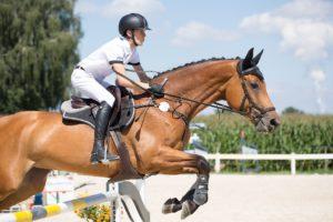 osteuropäische Pferdepfleger – Verladetraining für Pferde