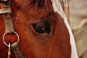 Stallhelfer gesucht – Blockaden bei Pferden vorbeugen