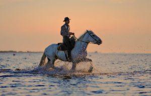 suche Pferdepfleger der auch Reiten kann