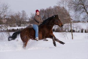 suche Pferdepfleger