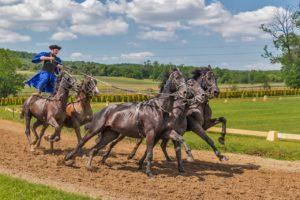 Pferdepfleger Aufgaben