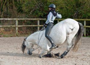 Stellengesuch Pferdepfleger sucht Arbeit sofort